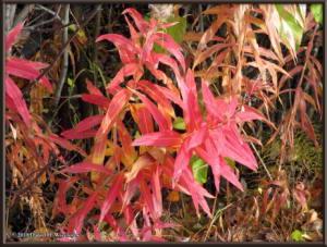 Sept17_020_ChenaHotSpringsRoad_AutumnColorRC