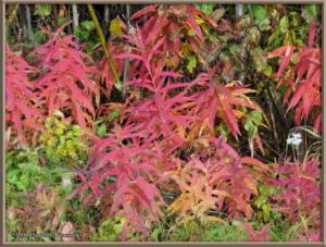Sept17_021_ChenaHotSpringsRoad_AutumnColorRC