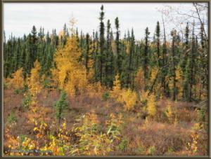 Sept17_027_ChenaHotSpringsRoad_AutumnColorRC