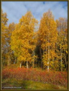 Sept17_029_ChenaHotSpringsRoad_AutumnColorRC