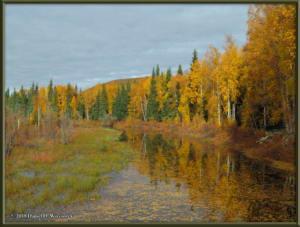 Sept17_031_ChenaHotSpringsRoad_AutumnColorRC