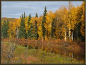 Sept17_033_ChenaHotSpringsRoad_AutumnColorRC