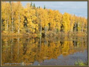 Sept17_035_ChenaHotSpringsRoad_AutumnColorRC