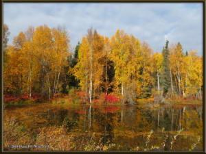 Sept17_038_ChenaHotSpringsRoad_AutumnColorRC