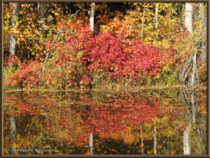 Sept17_041_ChenaHotSpringsRoad_AutumnColorRC