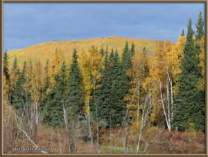 Sept17_060_ChenaHotSpringsRoad_AutumnColorRC