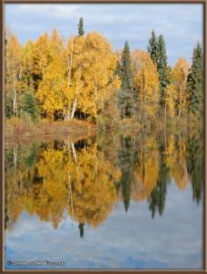 Sept17_071_ChenaHotSpringsRoad_AutumnColorRC
