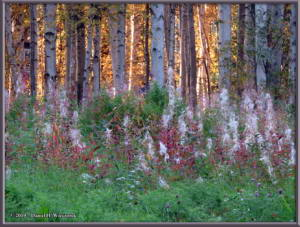 Sept8_12_AutumnColor_WalkFromHomeRC