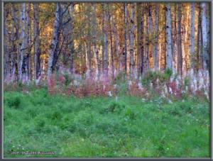 Sept8_13_AutumnColor_WalkFromHomeRC