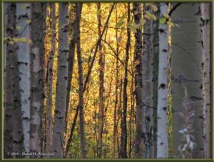 Sept8_16_AutumnColor_WalkFromHomeRC