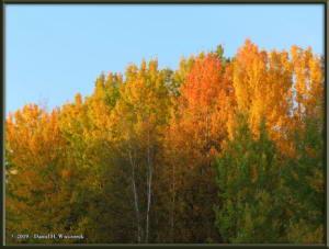 Sept8_28_AutumnColor_WalkFromHomeRC