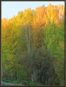 Sept8_29_AutumnColor_WalkFromHomeRC
