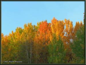 Sept8_30_AutumnColor_WalkFromHomeRC