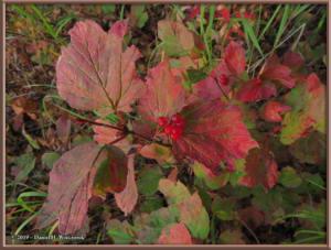 Sept8_41_AutumnColor_WalkFromHomeRC