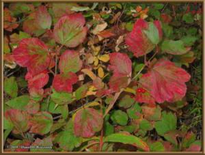 Sept8_46_AutumnColor_WalkFromHomeRC