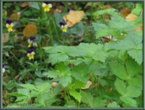 Sept8th_002_GardenHarvestRC
