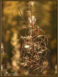Sept8th_014_AutumnColors_SteeleCreekRdRC