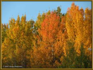 Sept8th_016_AutumnColors_SteeleCreekRdRC