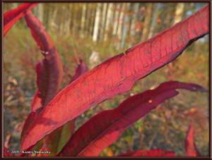 Sept8th_020_AutumnColors_SteeleCreekRdRC