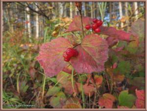 Sept8th_023_AutumnColors_SteeleCreekRdRC