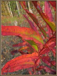 Sept8th_025_AutumnColors_SteeleCreekRdRC
