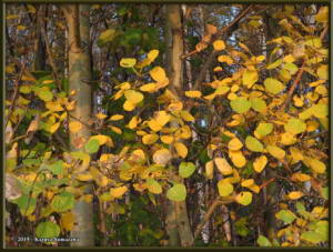 Sept8th_026_AutumnColors_SteeleCreekRdRC