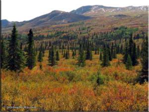 Sep1_13_DenaliNP_AutumnColorsRC