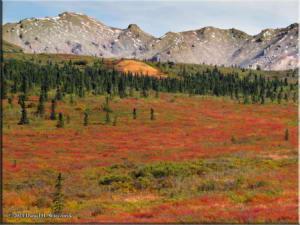 Sep1_27_DenaliNP_AutumnColorsRC