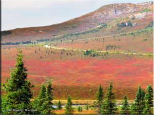 Sep1_30_DenaliNP_AutumnColorsRC