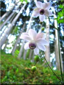 Aug12_Mitake_Rengeshouma01RC.jpg