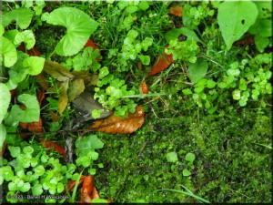Aug04_MtMitake_GreenBrownGroundRC.jpg