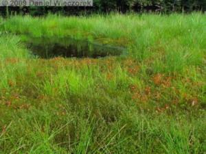 Aug03_SukayuHotSpringArea22_Pond_Drosera_rotundifoliaRC.jpg