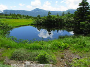Aug04_Mt_Hakkoda_Climb116_MarshFlowers_PondRC.jpg