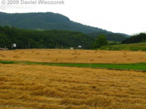 Aug05_Hokkaido_NisshinField01RC.jpg