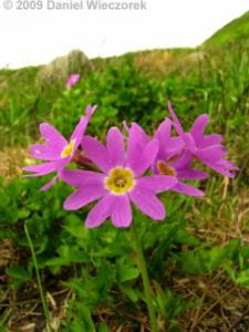 Aug10_MtAsahidake_NakadakeOnsen_to_FlowerFields13RC.jpg