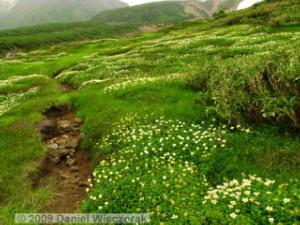 Aug10_MtAsahidake_NakadakeOnsen_to_FlowerFields27RC.jpg
