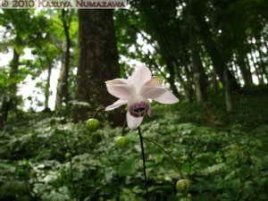 August1st_Mitake006_RengeshoumaRC