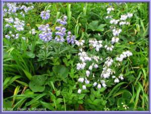 Aug08_085_ChokaiClimb_FlowersRC