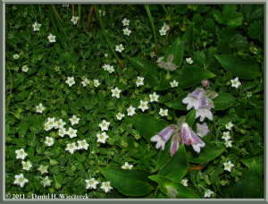 Aug09_072_MtChokaiDescent_FlowersRC
