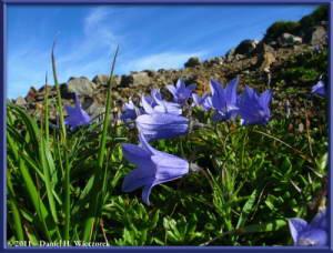 Aug09_105_MtChokaiDescent_FlowerRC