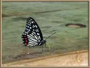 Aug03_03C_Takao_san_ButterflyRC
