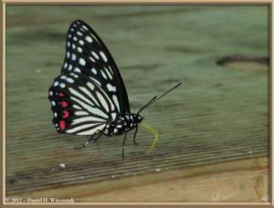 Aug03_06C_Takao_san_ButterflyRC