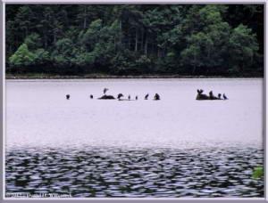 Aug14_10_OzeNumaArea_BirdsRC