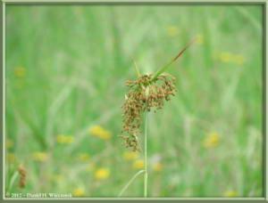 Aug14_42_OzeNumaArea_GrassRC