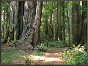 Aug12_10_InTheRedwoods_JedediahSmithStateParkRC
