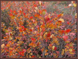 Aug26_06_USCreekRd_BerryPicking_AutumnColorRC