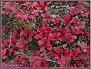 Aug26_08_USCreekRd_BerryPicking_AutumnColorRC