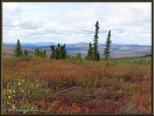 Aug26_11_USCreekRd_BerryPicking_AutumnColorRC