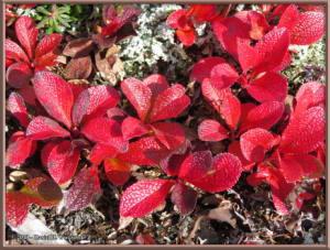 Aug26_17_USCreekRd_BerryPicking_AutumnColorRC
