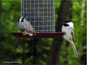 Aug23_05_BirdFeeder_RBNURC